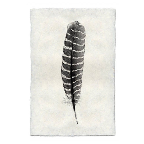 Feather Study #16