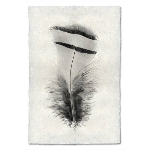Feather Study #15