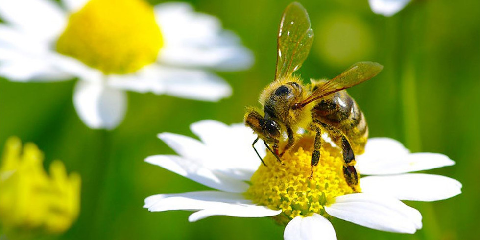 CEP Calgary x March: Bees and other pollinators