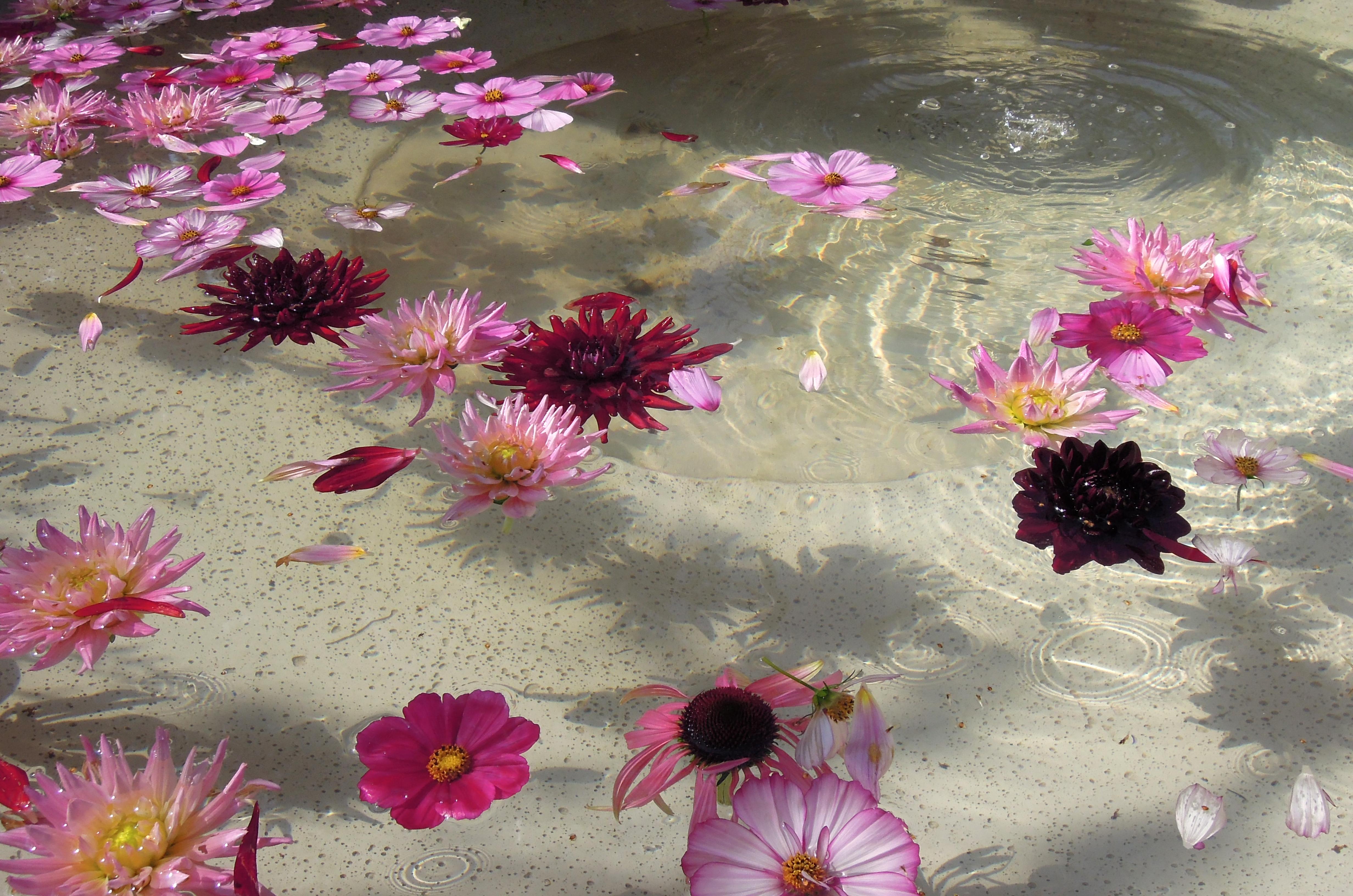 Blütenbad