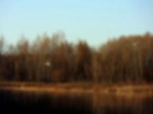 Blue Herons.jpg