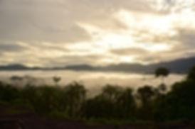 niebla sentada sobre el bosque tropical