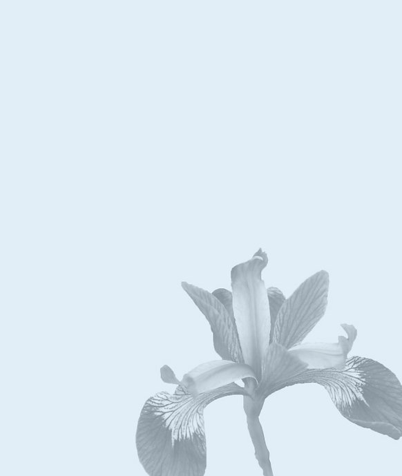 Flower_BG.jpg