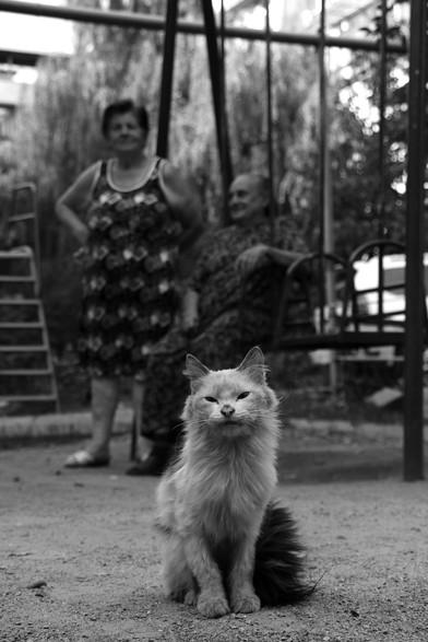 Хозяин двора - старый кот, его знает весь двор