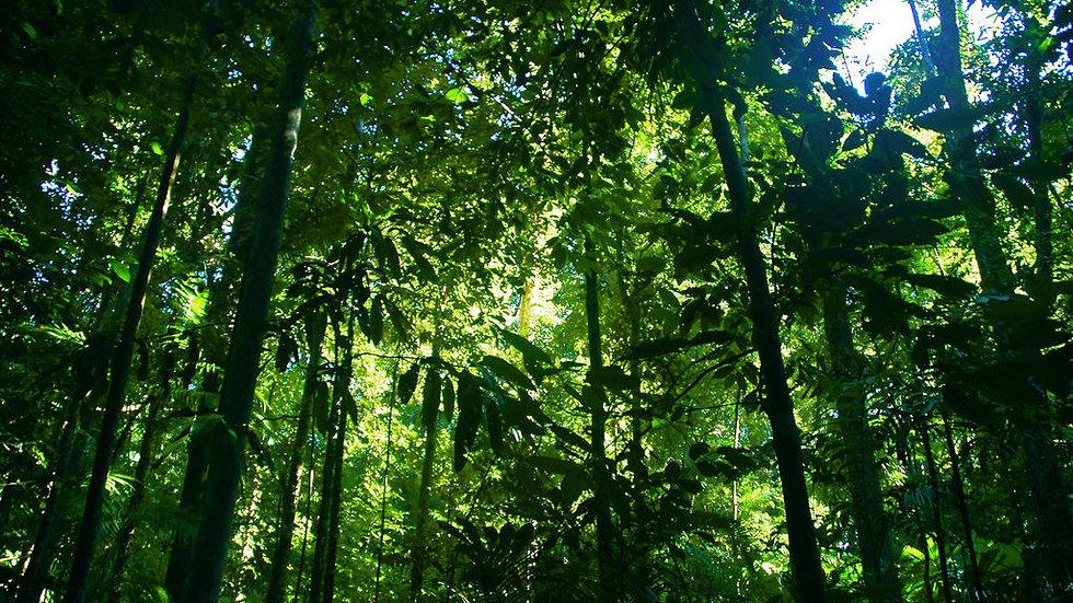 【经典】丹翠热带雨林生态探秘游