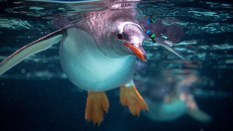 【经典】企鹅岛一日游
