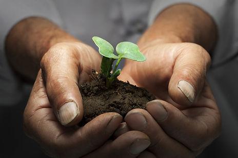 MännerhändePflanzeshutterstock_367344887