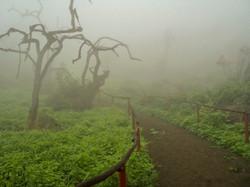 Lomas de Lachay / Lachay fog forest