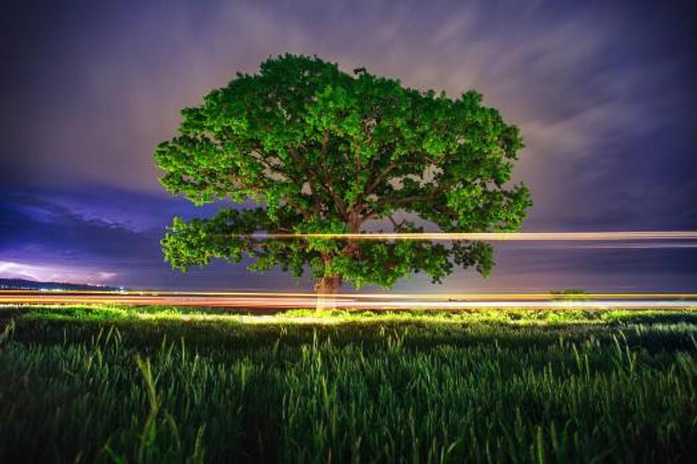 Tree & light