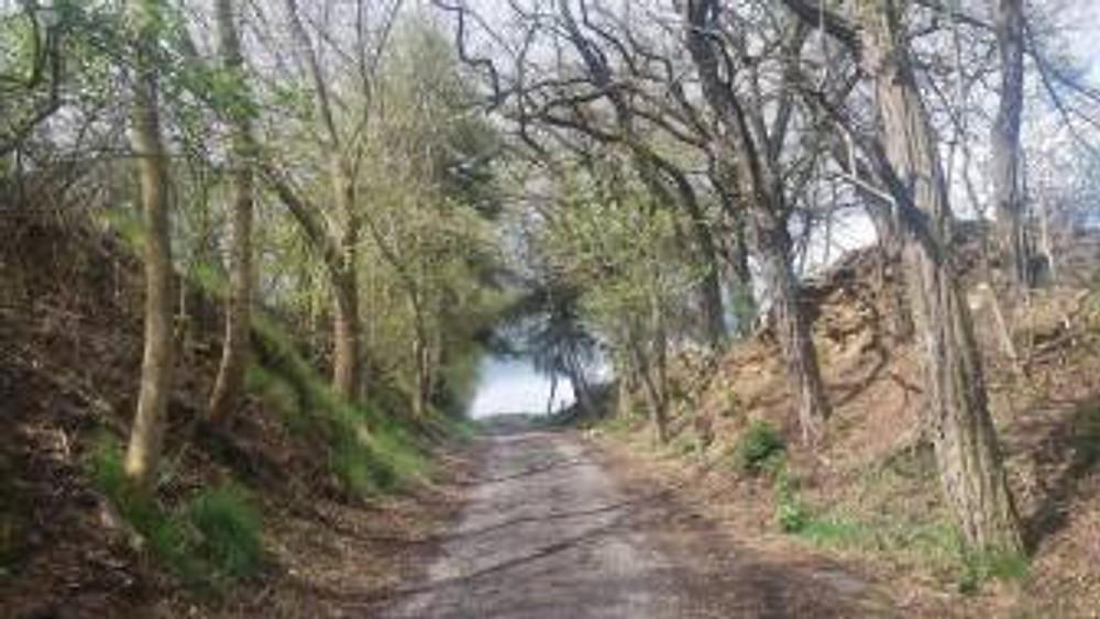 Klara road