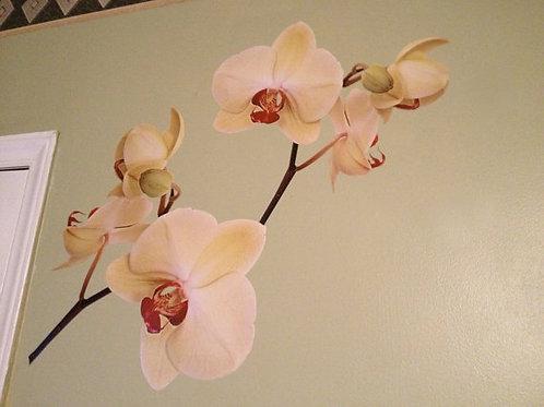 Orchid Flower Wall Decal - Deco Art Sticker Mural