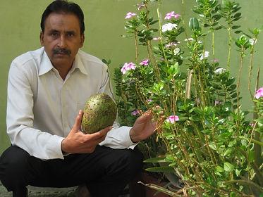 Dr. F. Rehman botanical garden along with graviola fruit and catharanthus roseus
