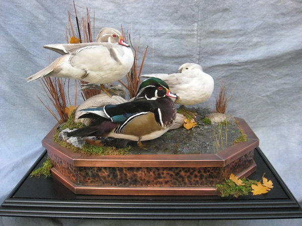 taxidermy wood ducks