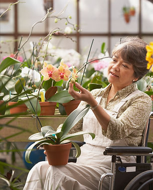 Elderly Woman in a Wheelchair holding a potted orchid inside of a greenhouse
