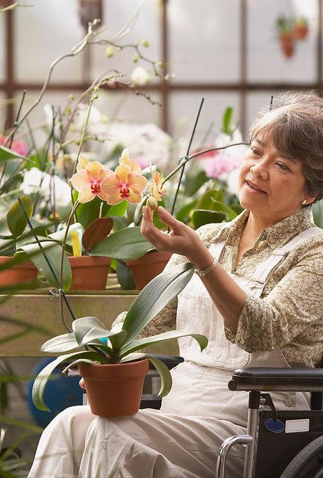 Donna in sedia a rotelle in serra