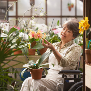 woman-in-wheelchair-in-greenhouse