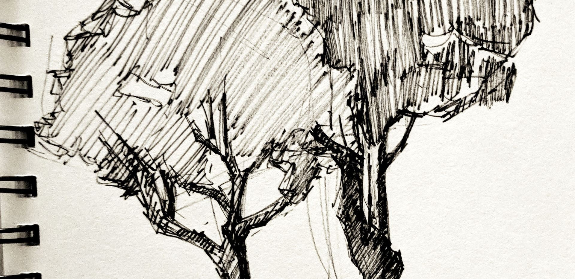 Zebra Brushpen sketch
