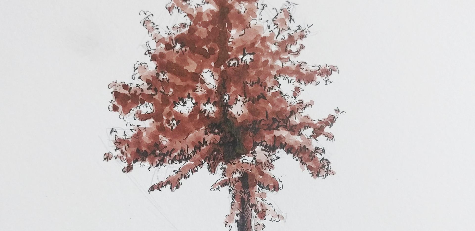 walnut ink sketch