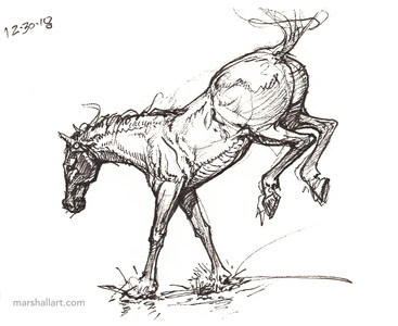 marshall_horse5.jpg