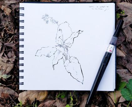 Brush pen plant study