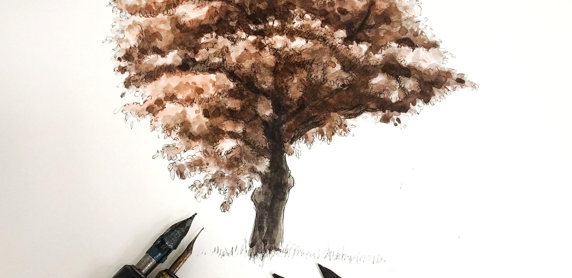 Walnut ink washes and nib line work