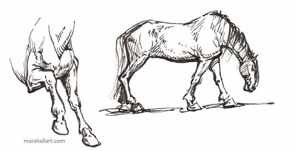 marshall_horse2.jpeg