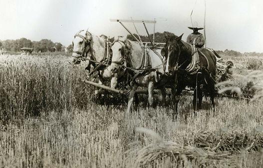 Wheat farming in Jarales, NM (1920s)