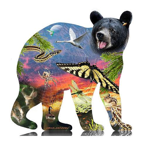 Chuck bear 2019 frame.jpg