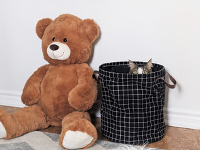 oversized teddy bear beside a laundry hamper with a cat inside, picture ledge with kids books