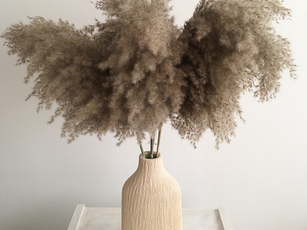 fluffy and beautiful Pampas grass in neutral beige vase