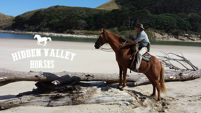 horse trekking New Zealand, Horse treks NZ, things to do near opononi