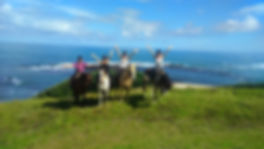 horse trekking New Zealand, Horse treks NZ, things to do near opononi