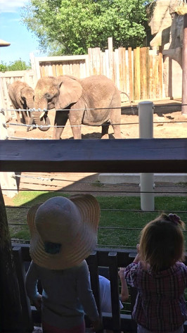 Watching the elephants at the zoo