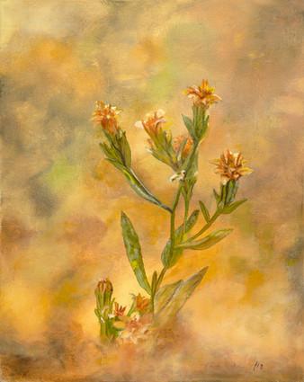 Feeling of Wildflowers 16x20 .jpg