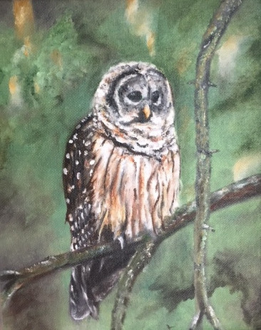 Sleepy Owl.jpg