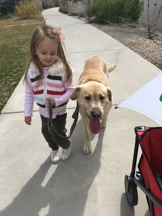 They love to walk the dog