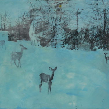 urban deer, hooper and rockrose park, twilight