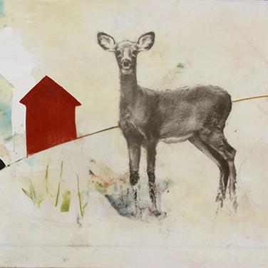 development deer