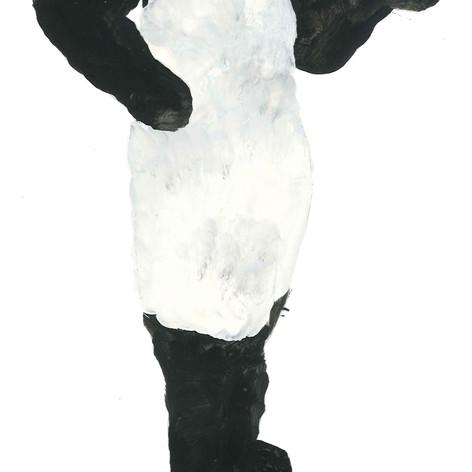 panda amanda (body)