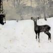 urban deer, hooper and rockrose