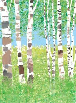 7月 白樺の林