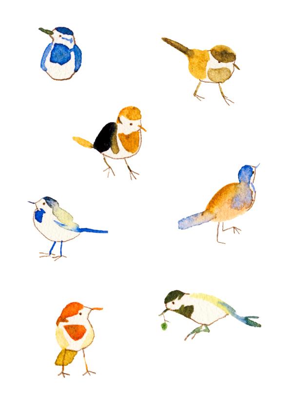 野鳥 01