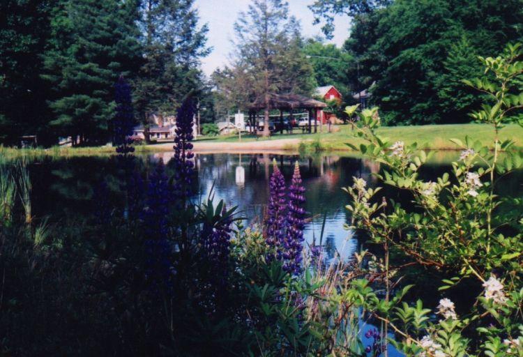 Back Side of Our Pond