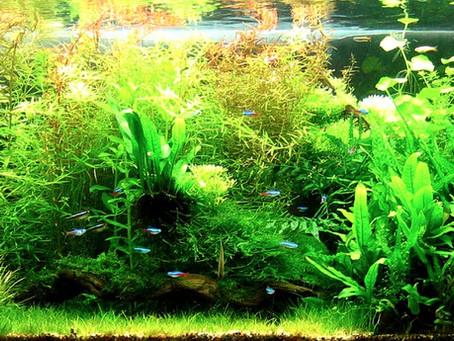 How To Grow Aquatic Plants