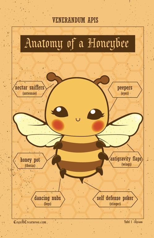 Honeybee Anatomy Poster 11x17