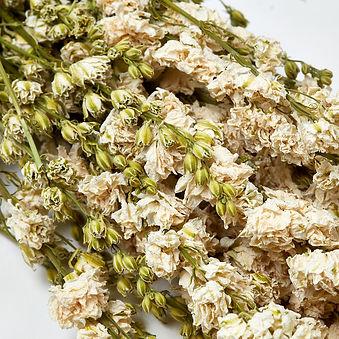 Dried Delphinium Natural White 2.jpg