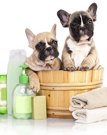 dog-grooming-services-1.jpg