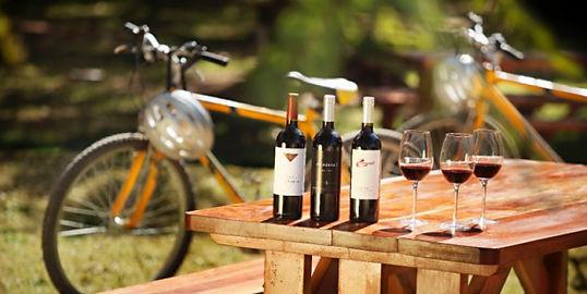 bike-tour-valpolicella-verona.jpg