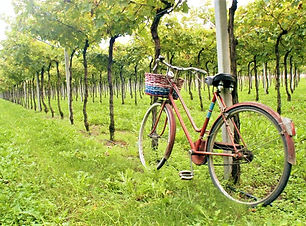 bike-tour-valpolicella.jpg