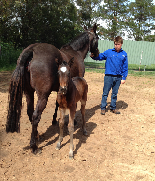 Magic Nights Colt